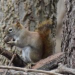5 Secrets about Squirrels